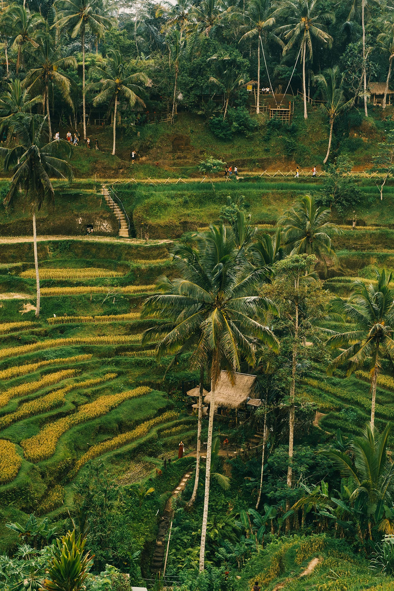 Tegalalang Rice Field